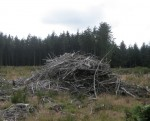 http://www.simonlewandowski.co.uk/files/gimgs/th-52_52_woodpile03.jpg